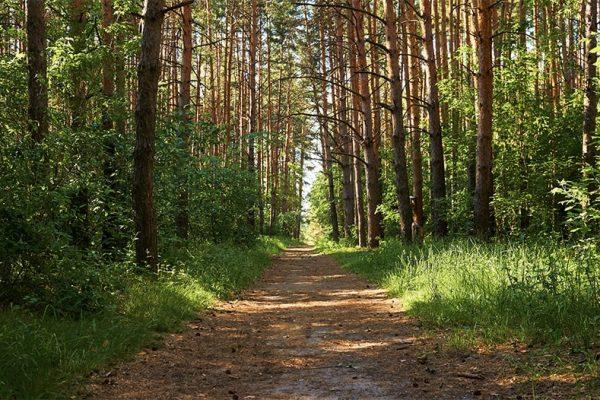 Lesnictvi_Natrur_Forest_V1-min