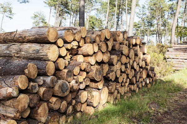 Vykup_kulatiny_Nature_Forest_V1-min